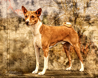 Helen Cronenberger Basenji Art Houston July 2013
