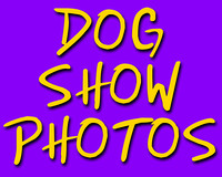 Dog Shows and Events (all years)
