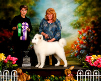 Samoyed Sat S1 Res Best Puppy in Show Karla Baker