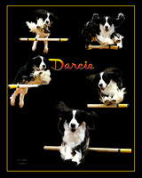 Donna Ewing FW Agility 2011 Poster