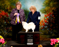 American Eskimo Sat S1 Champ of Champions Susan DeLaPaz Judge Pam Moore