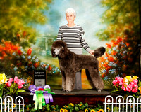 Poodle Standard Sun G2 Charlisie Bowers